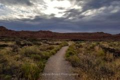 Desert-Morning